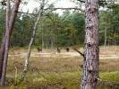 Exmoor Ponys am Rundwanderweg_2