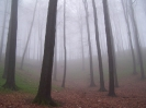Nebel im Teutoburger Wald