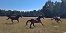 Senner Pferd_1