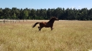 Senner Pferd_4