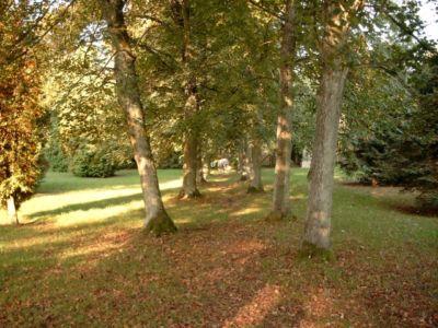 Friedhof Vom Ehem Haustenbeck 20120327 1978670870