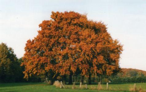 Herbst 20120327 1049395249