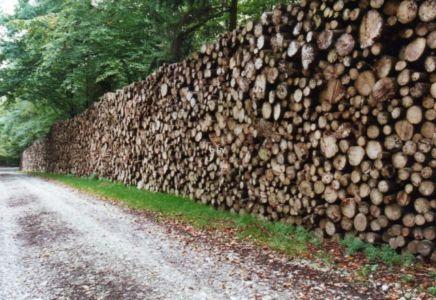 Holzeinschlag 20120327 1688858151
