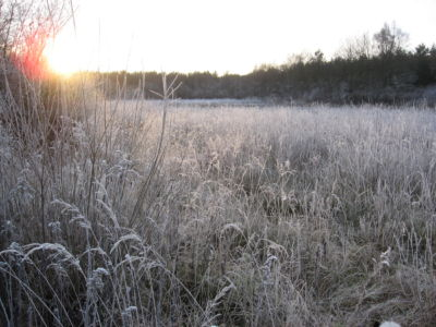 Morgensonne 20120327 1979013159