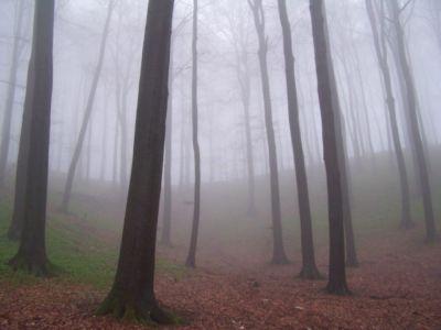 Nebel Im Teutoburger Wald 20120327 1219618300