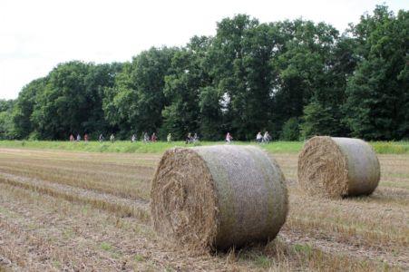 Rund Um Augustdorf 60 20150816 1901667919