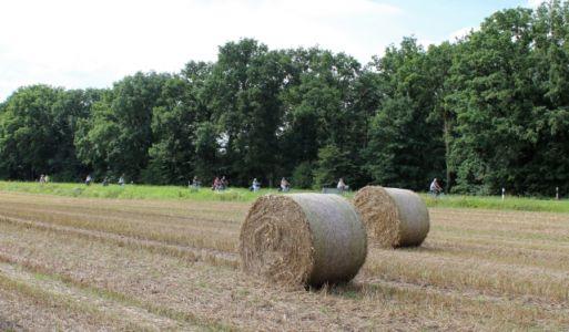 Rund Um Augustdorf 61 20150816 1266033603