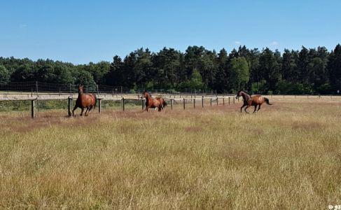 Senner Pferd 2 20180707 1936696995