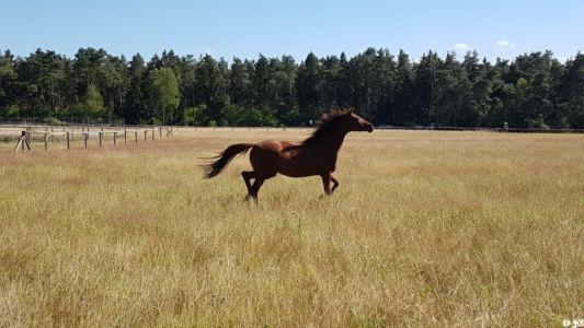 Senner Pferd 4 20180707 1149002347
