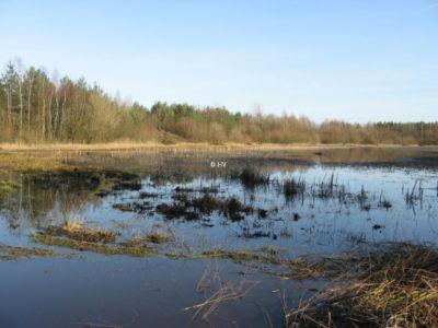 Teich Am Rundwanderweg O 20120327 1728601453