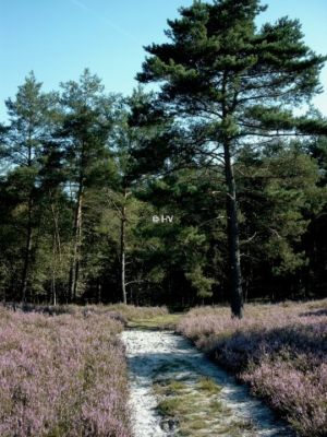 Weg Durch Die Heide Rundwanderweg O 20120327 1882600595